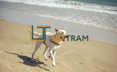 Правила содержания домашних животных в Испании.